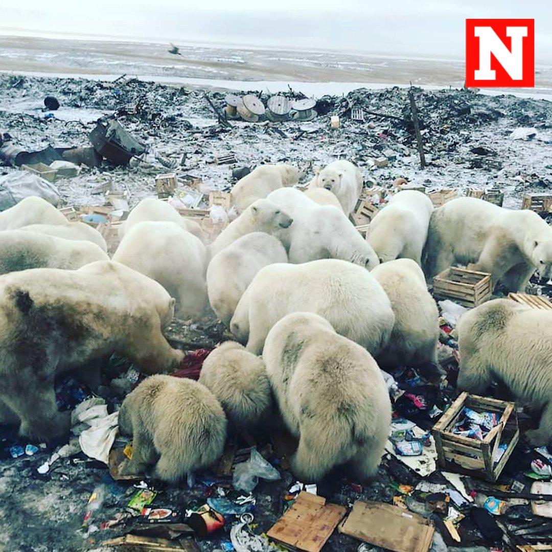'Aggressive' polar bears stage 'mass invasion' of town https://t.co/xWV7tB9uaH https://t.co/5cc621o8Hj