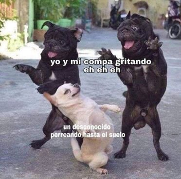 Perrhijos's photo on #BuenInicioDeSemana