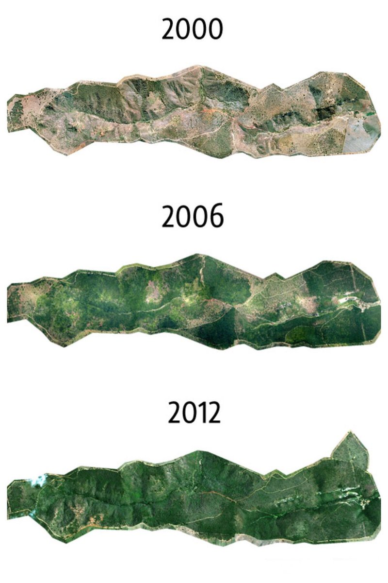 In only 20-years this reforestation project in Brazil planted of over 2.7 million trees on a 1500 acre plot to restore and revive a broken ecosystem. Flora and fauna returned. Great effort. More work like this across the globe please. Source: https://buff.ly/2TGsVK5