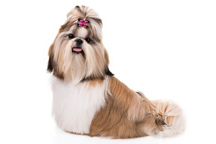 Portmanteau Jones's photo on #dogshowschmovies