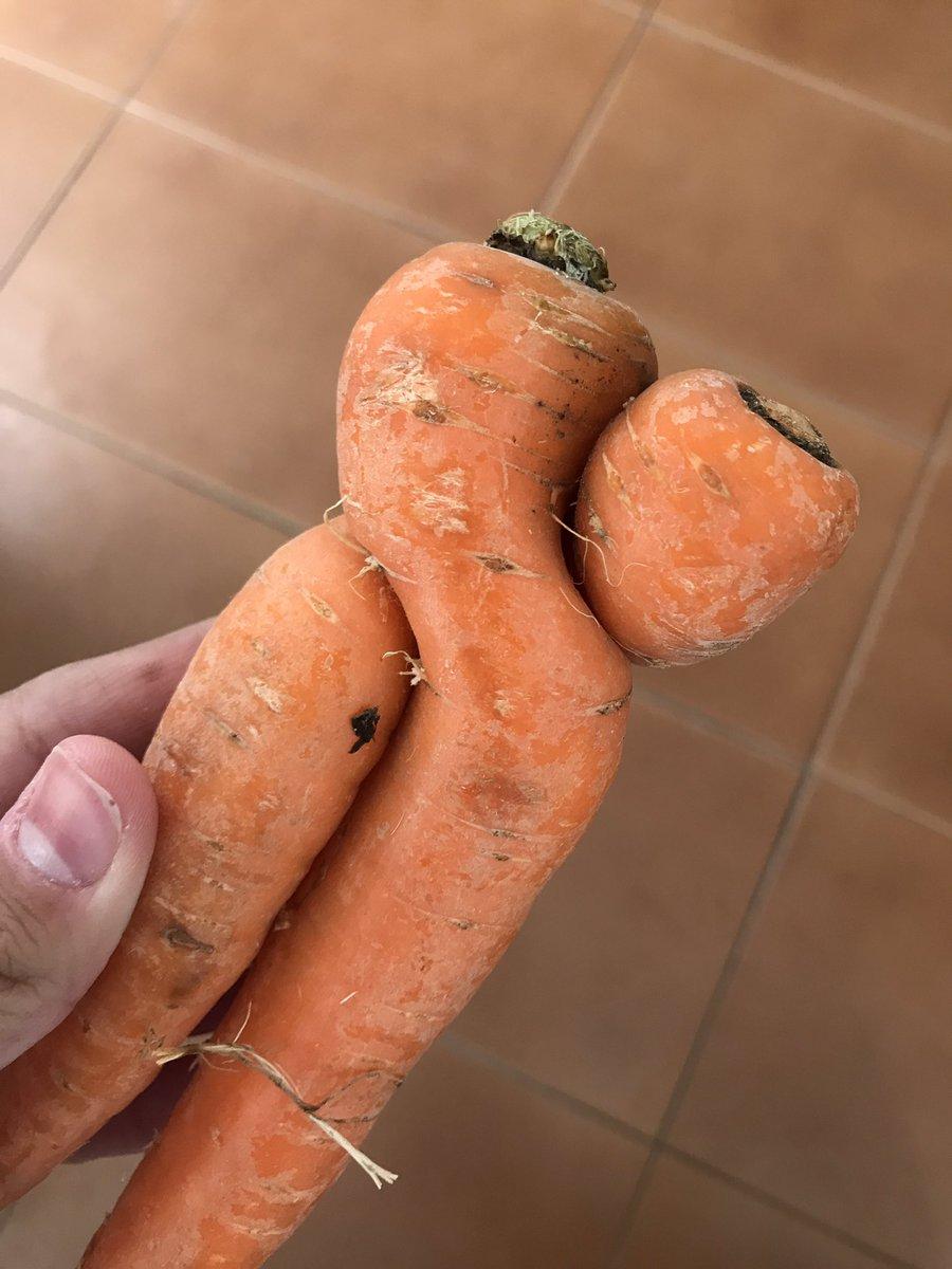 Rt a la zanahoria abrazada o mala suerte en los próximos examenes 😳📚