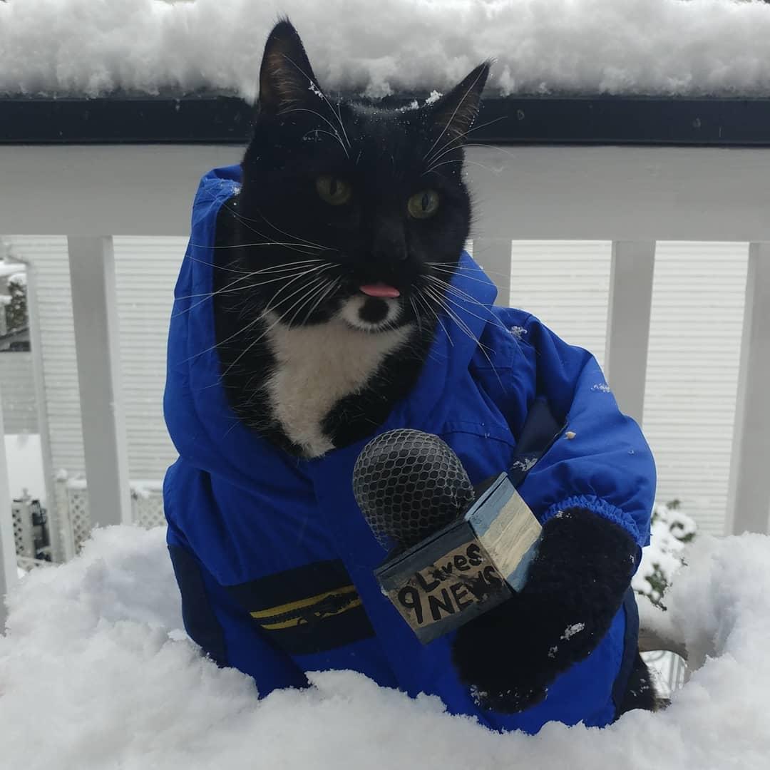Catt Johnson Outtakes from our 9 Lives News photoshoot.  #SeattleSnowpocalypse #SnowMageddon2019 #SeattleSnow  #PickAHashtagAlreadySeattle<br>http://pic.twitter.com/lJnLrUJdH4