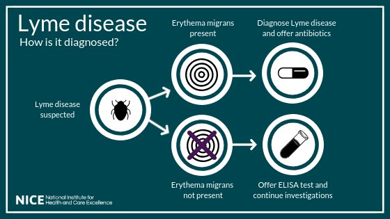 test Twitter Media - Today we have published a draft quality standard on diagnosing and treating Lyme disease. We say Lyme disease can be diagnosed if the bull's eye rash is present, without the need for blood tests. Read the full story: https://t.co/5DeNWqA3i4 #LymeDisease https://t.co/T16husyE4b
