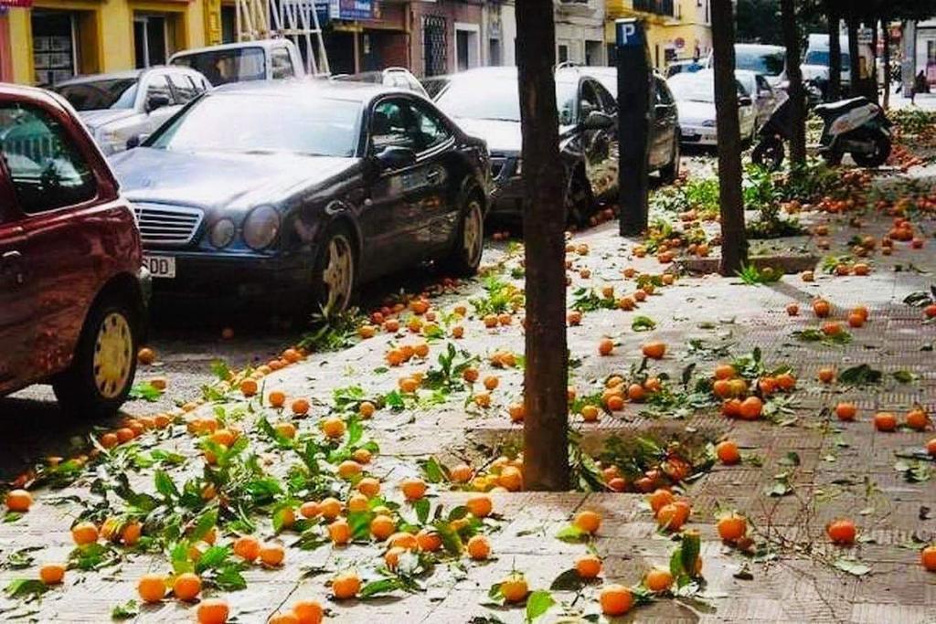 تساقط البرتقال في #اشبيليةاسبانيا   أخبرنا ماذا  يتساقط بشوارع #بلدك🤔