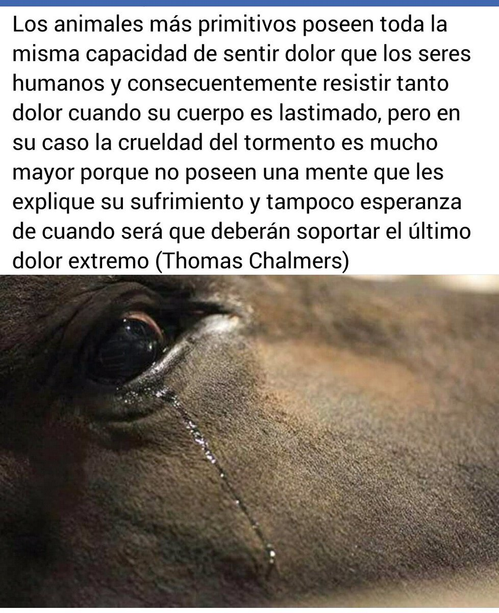 Begoña ♀🐾's photo on #BastaBecerradas