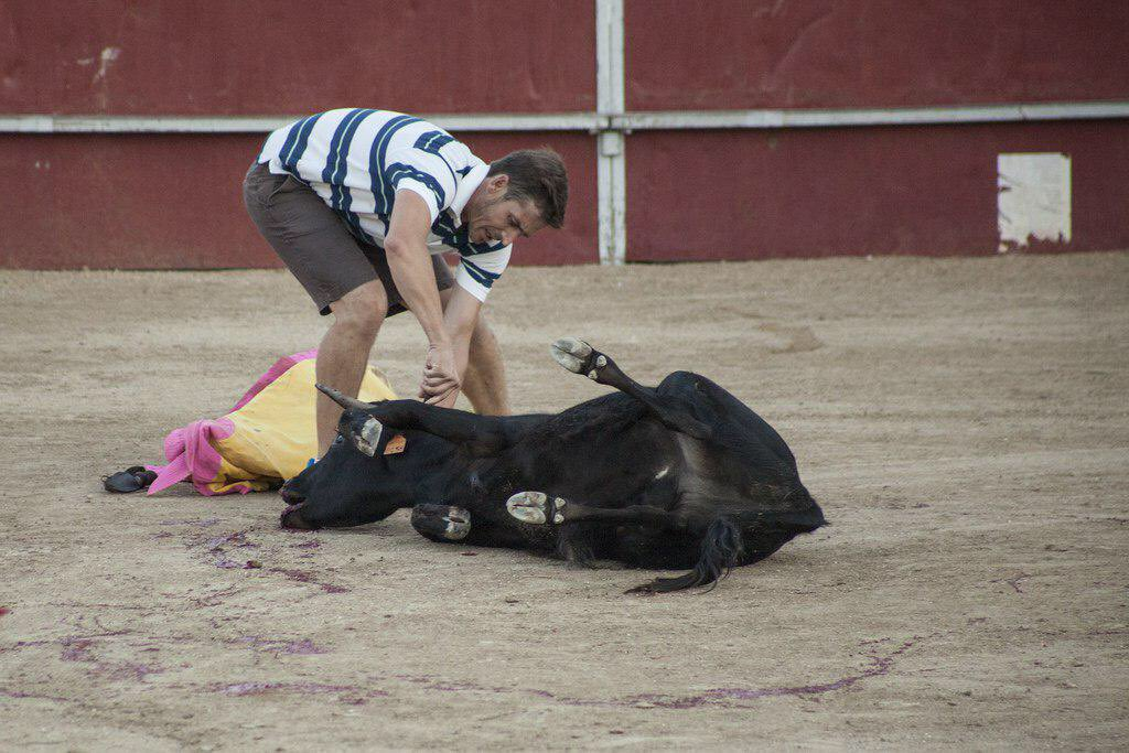 equoderechosanimales's photo on #BastaBecerradas