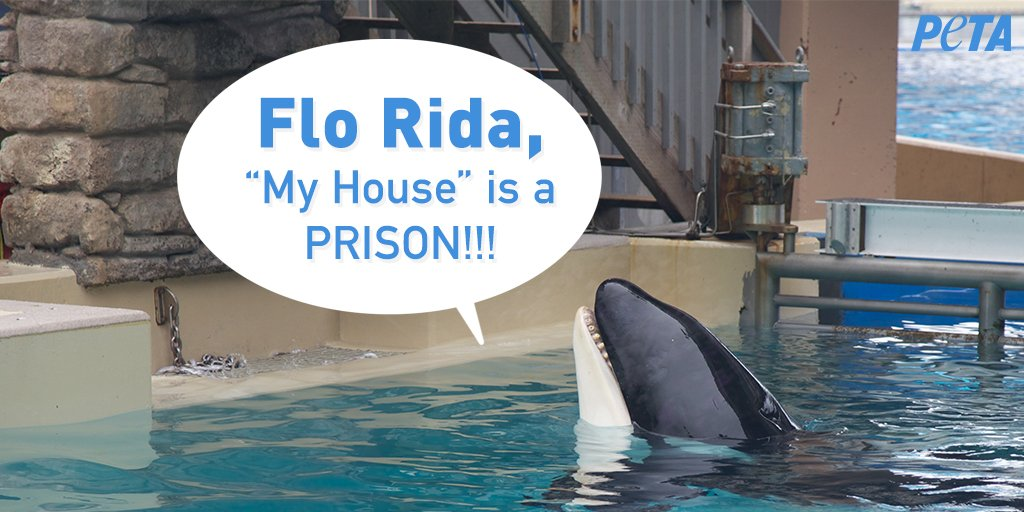 Hey Flo Rida (@official_flo),   Over forty orcas have died at @SeaWorld and more than one-hundred dolphins and whales are still imprisoned in cramped, unnatural habitats 😡 💔  CANCEL YOUR PERFORMANCE!
