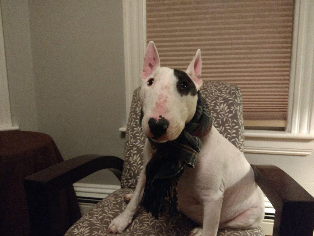 Rex the TV terrier's photo on #Manifest
