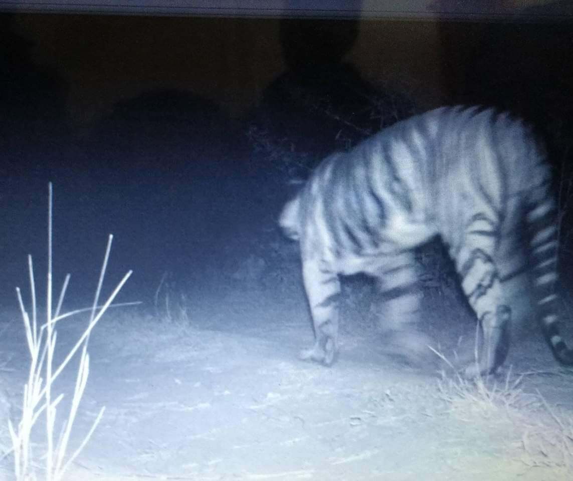 Forest department confirms presence of Tiger in Gujarat, the state famous as land of Gir lions