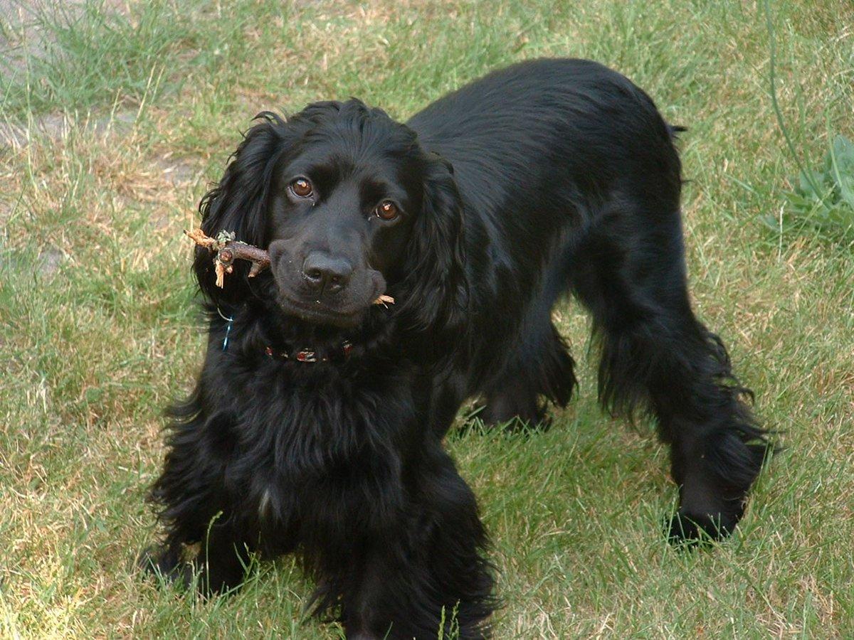 Boston terrier Lover's photo on Kyle Guy