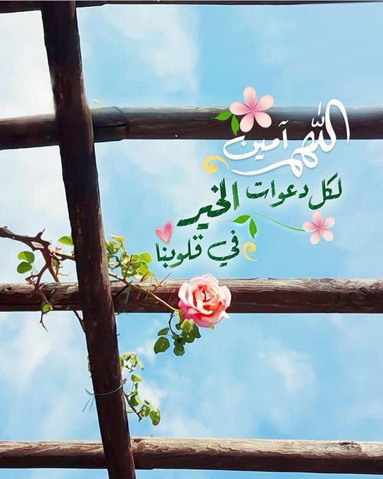بارد علي صورة فوتوغرافية