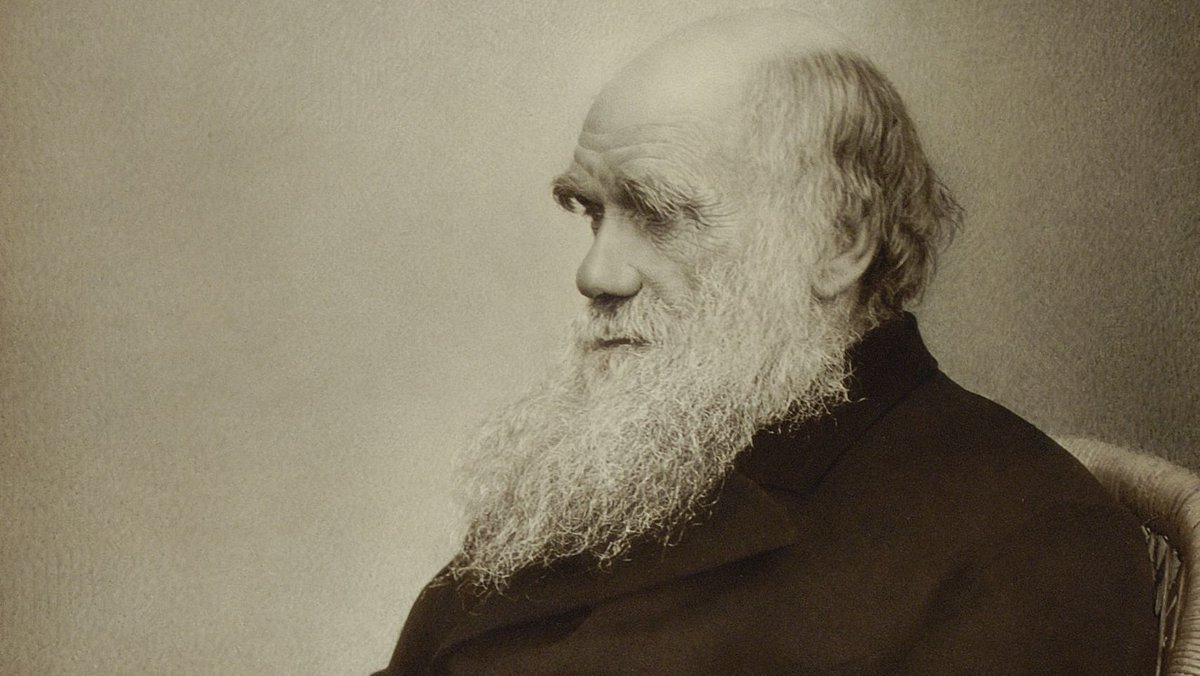 The Royal Society's photo on Charles Darwin
