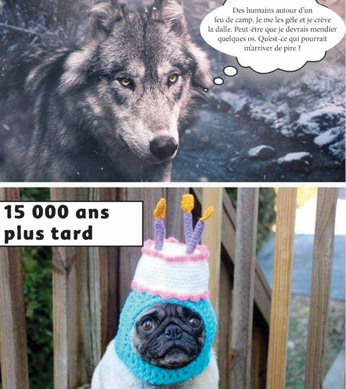 """Emission consacrée aux chiens @RFI et une question : Comment l'histoire des chiens raconte aussi celle de notre humanité ? Avec @histoire_monde #LaurentTestot Il vient de publier """"Homo Canis"""" @Editionspayot (crédit photo de gauche : http://funny-memes.org) à 14H10 TU/16H10 Paris"""