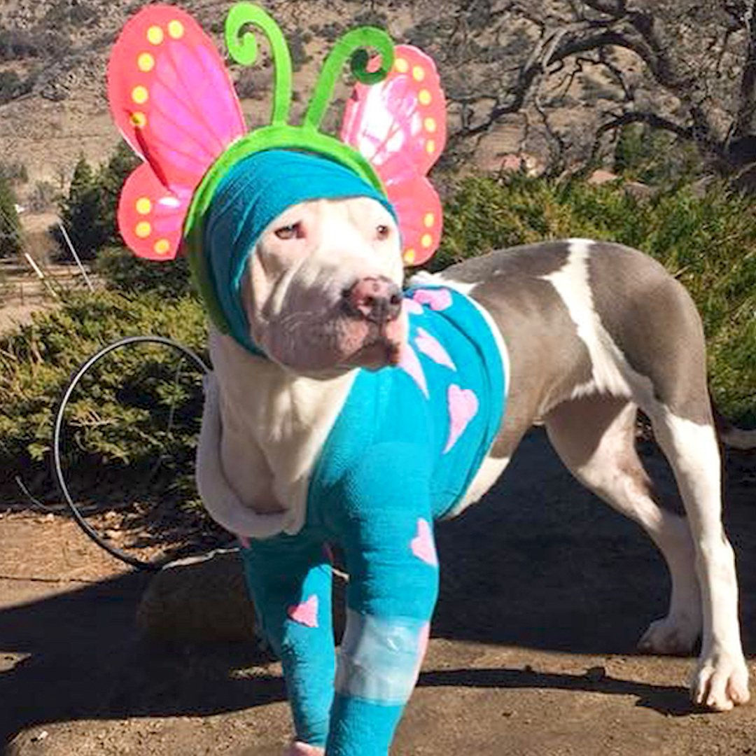 This injured pittie puppy wasn't feeling so good about herself — until someone dressed her up like a butterfly 🦋 ❤️