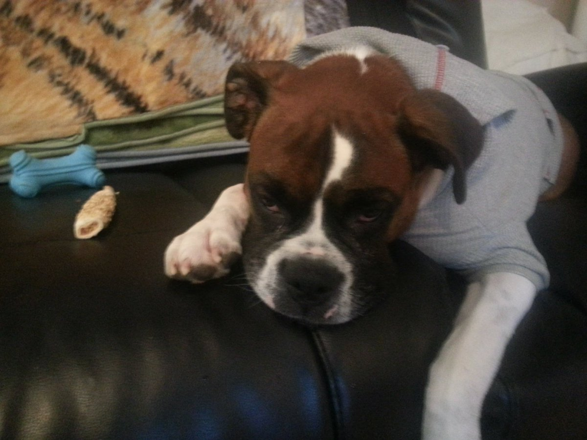 Tommy, we had our Rocky the Boxer on prednisone, and I slept downstairs on a blow-up mattress with him. My heart and prayers go out to you. Hugs to Sunny. It's very hard to say goodbye, so I we keep the paw-fect memories alive.