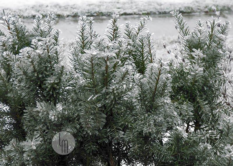 Leslie Montgomery's photo on #WinterStorm