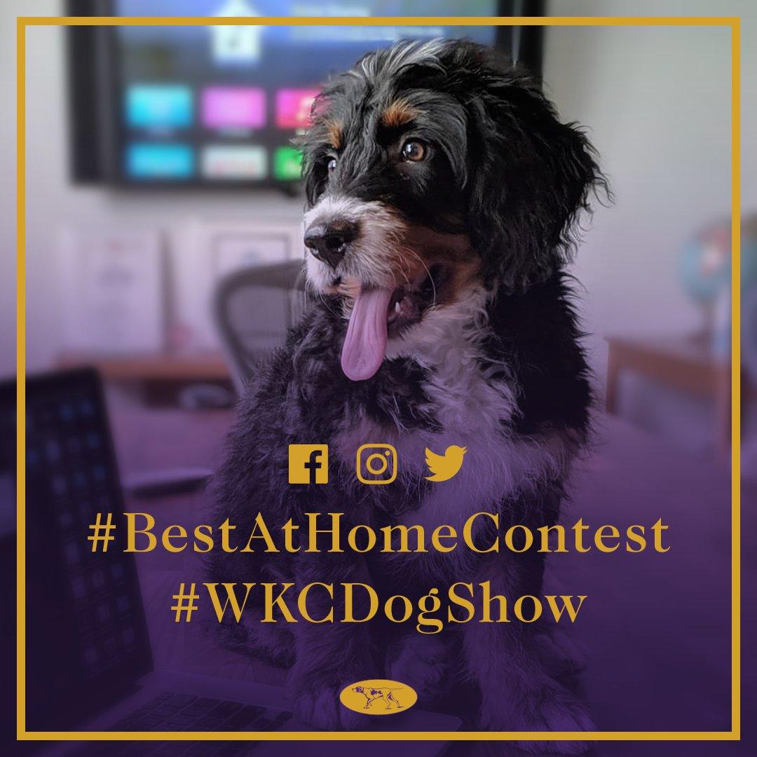 Westminster Dog Show's photo on #BestAtHomeContest