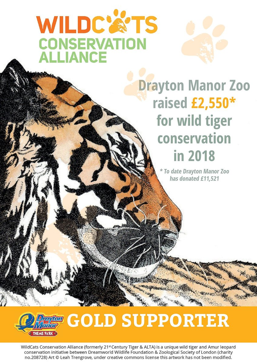As part of our conservation efforts, Drayton Manor Zoo raised £2,550 for @ConserveWildCat  in 2018. That takes our total donations to date to an impressive £11,521, making us a gold supporter! http://socsi.in/ciQno