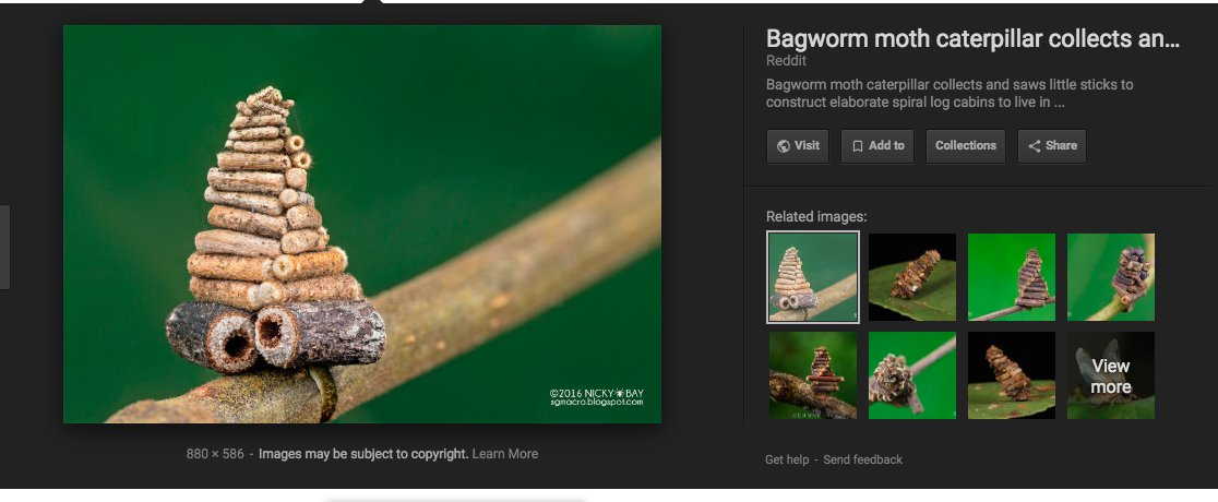 Zoë Schlanger On Twitter I Have Just Been Informed That Bagworm