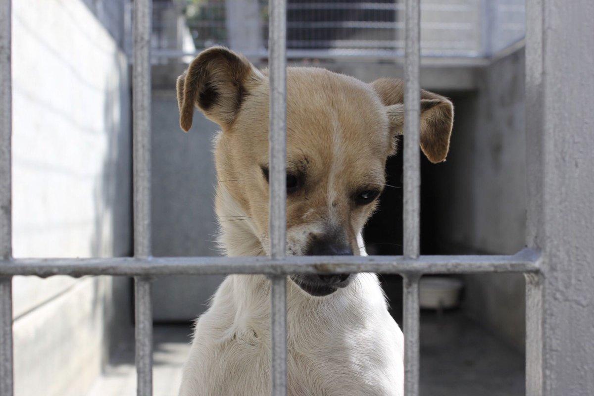 PETA's photo on #WestminsterDogShow