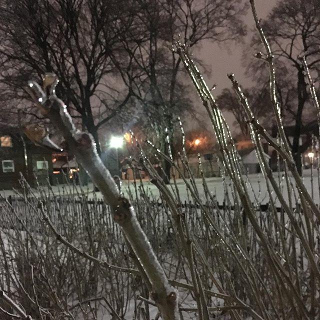 April Boultbee's photo on #WinterStorm