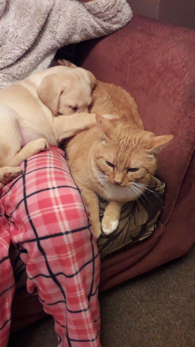 We are besties already!!! #dogsoftwitter #PuppyLove #CatsOfTwitter #puppies<br>http://pic.twitter.com/yioNXTLanP