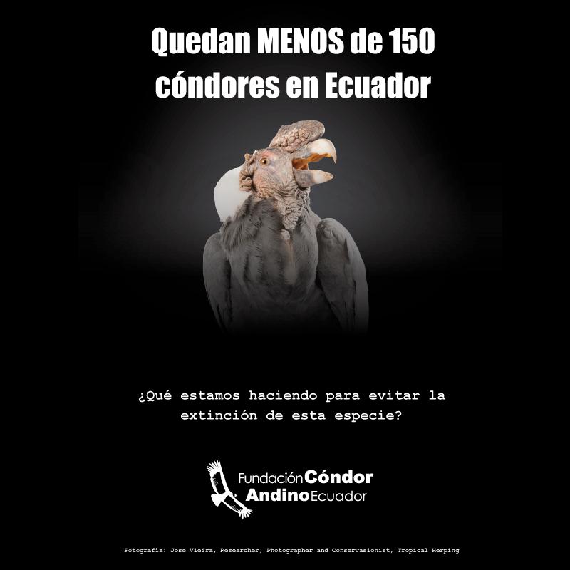 Fundación Cóndor Andino Ecuador's photo on Labor