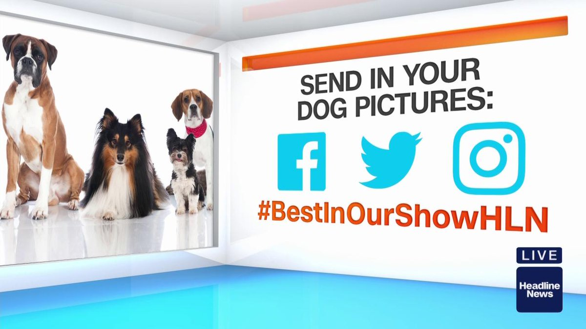 Morning Express with Robin Meade's photo on #WestminsterDogShow