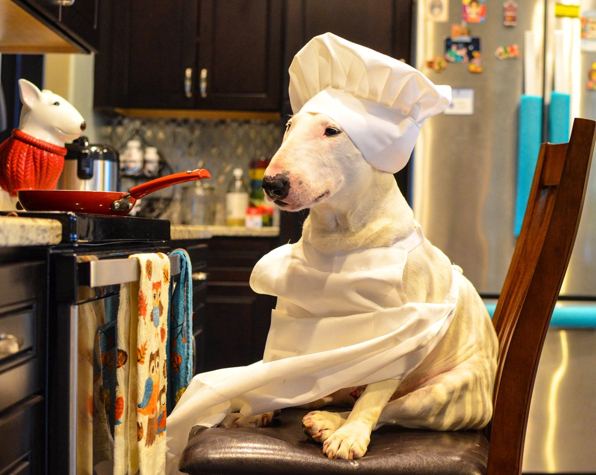 Looking for a baker? I'm your dog! As long as you don't mind the cookies being 80% eaten...or 90%.. or actually just the crumbs for you   . . . . #chef #dogsoftwitter  #dogsofinstagram #bullterrier #bullterriers #puppers #puppy #dogs #dog #dogtravel #traveldog #dogfriendly<br>http://pic.twitter.com/RPzYWp7z73