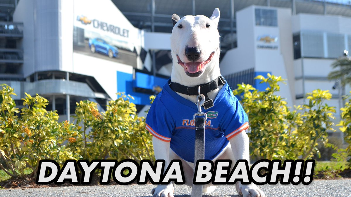 Hello my friends! I take a stroll along the beautiful #Daytona Beach boardwalk! Join us and check out the gorgeous buildings, shops and attractions on the beach!  . . . #capecanaveral #daytonabeach #bullterrier #dogtravel #pettravel @DaytonaBeachFun  . .  https:// m.youtube.com/watch?v=h1yLGp D26Aw &nbsp; … <br>http://pic.twitter.com/yVwY8V3VUV