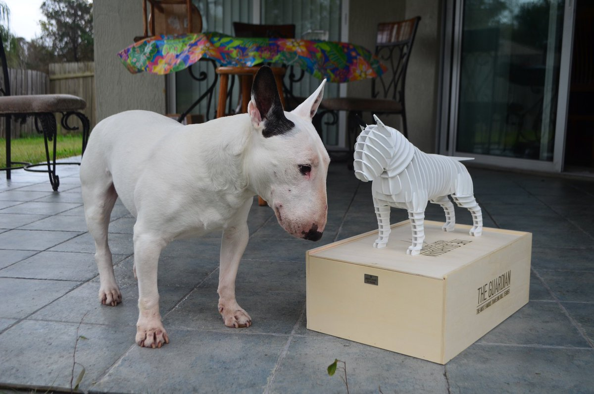 How cool is this!? A new friend! Thanks to artist Vianney Garat!  . . #dogsoftwitter #dogsofinstagram #bullterrier #bullies #bullterriers #puppers #puppy #dogs #dog #dogtravel #traveldog #dogfriendly #dogmodel<br>http://pic.twitter.com/5surL2FZBP