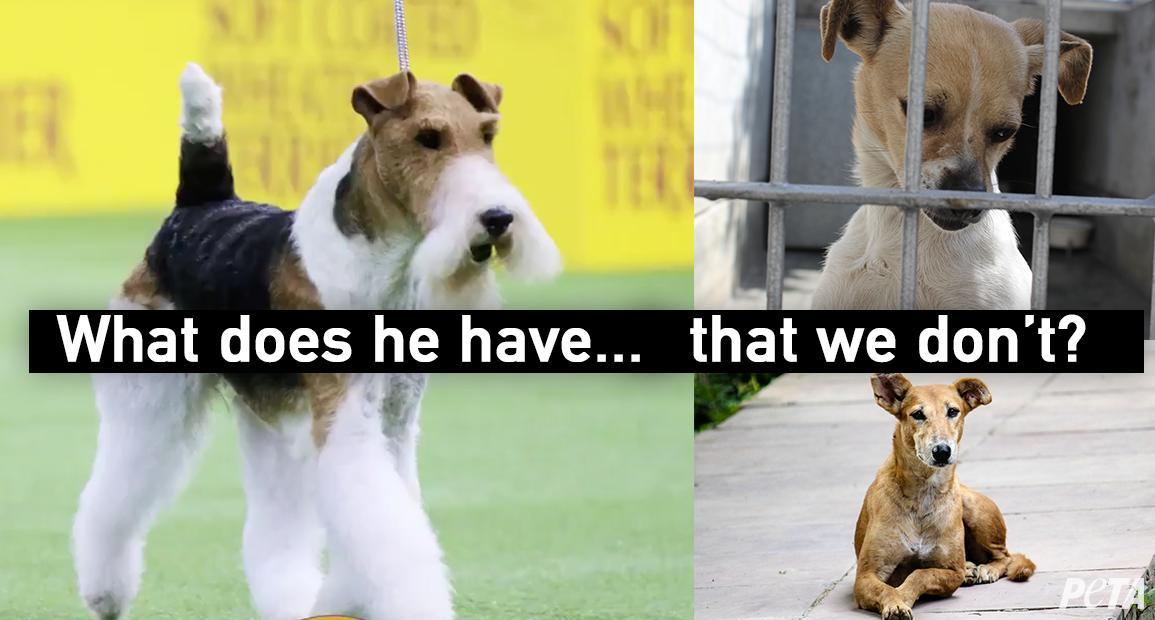 PETA's photo on #WKCDogShow
