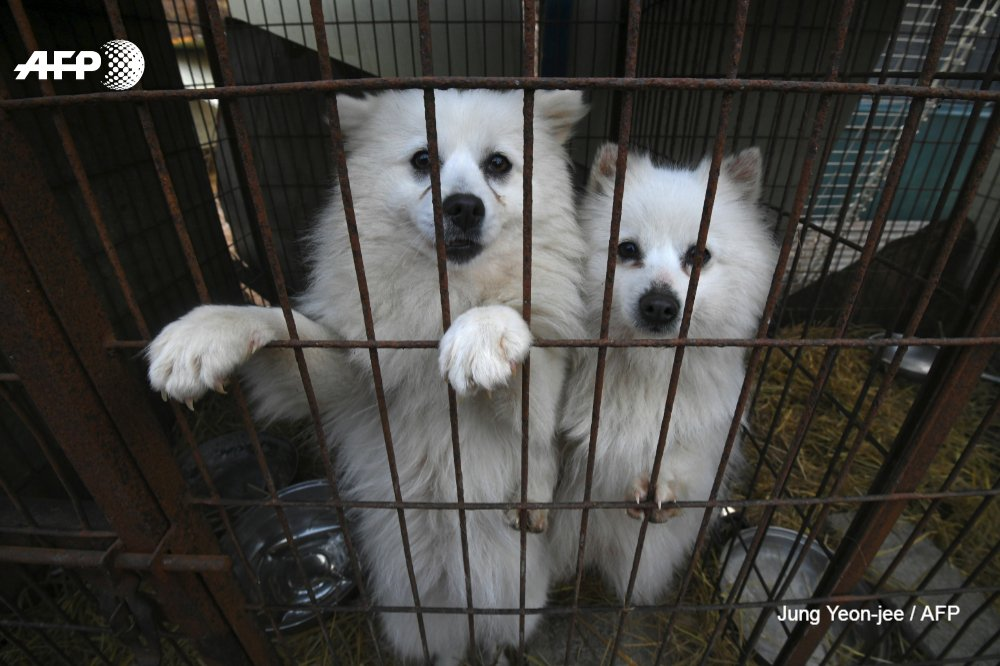 A south korean dog meat and puppy mill is closed down in hongseong