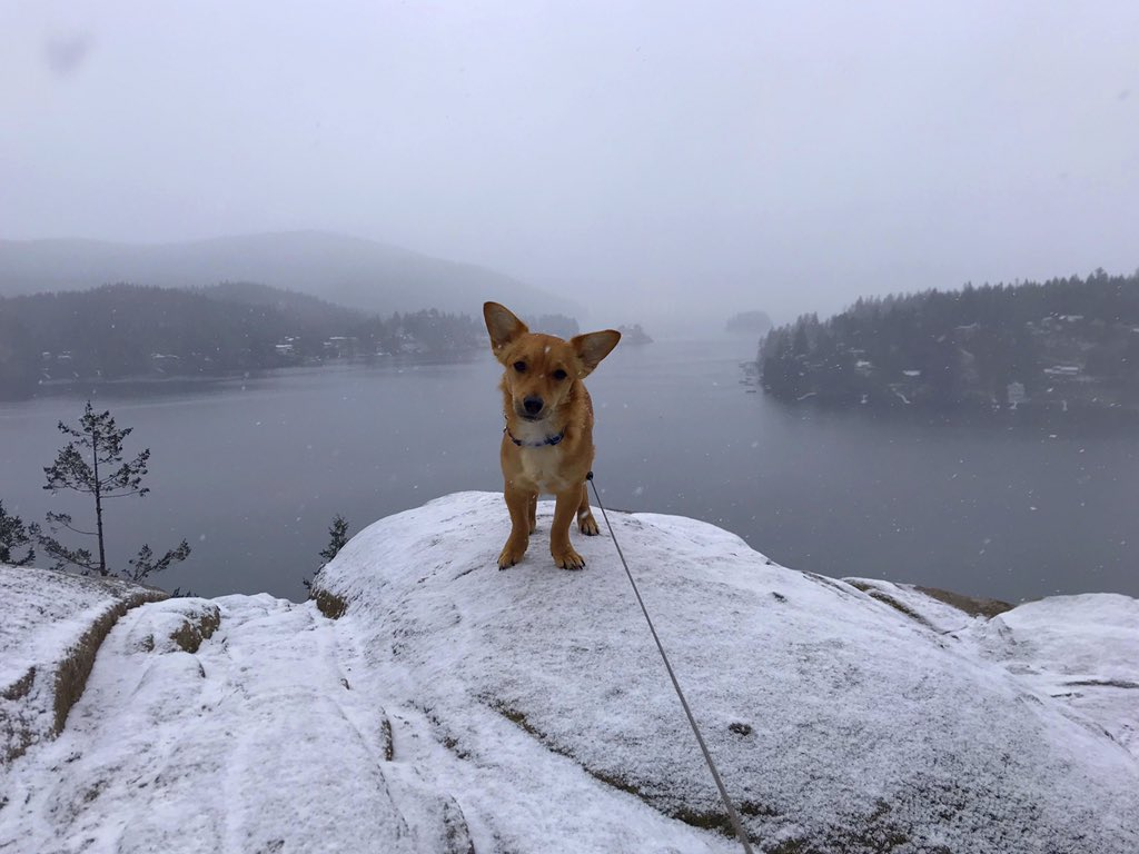 I had a blast with Auntie @emmacitrine and Uncle @itsbryanmichael on our snowy hike adventure! #tailsoftucker  #GubSquad #dogsofvancouver #yvr #nc_cuties #westcoastpets #pnwdogs #chiweeniepoo #adventurewithdogs #potd #OptOutside #exploreBC #beautifulbc #quarryrock #hikepic.twitter.com/sIrkfqqb1O – at Quarry Rock