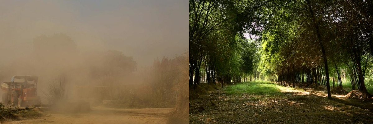 Destroyed by clay brick mining, restored with #bamboo. Before and after pictures from an area in Allahabad, North India, 1996 &amp; 2016. We are proud to work with partners including @IFAD @icraf @UNCCD @GlobalLF to help communities #thinkbamboo for land restoration. #LDNtargets<br>http://pic.twitter.com/fqhIfZDsvz
