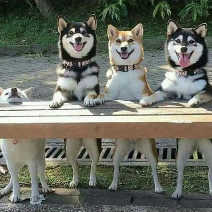 Every group has that one frien #corgi #doggy #puppies #puppy #doglovers  #doglife #puppylove <br>http://pic.twitter.com/TqghFR29d9