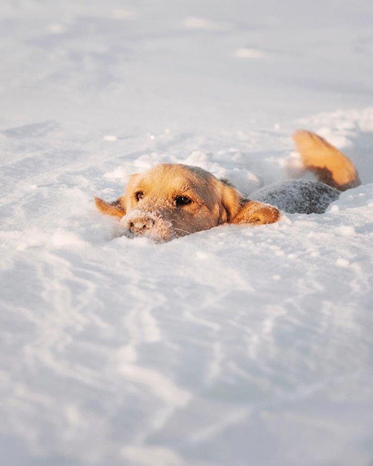 Ottawa Tourism's photo on #SnowMageddon2019