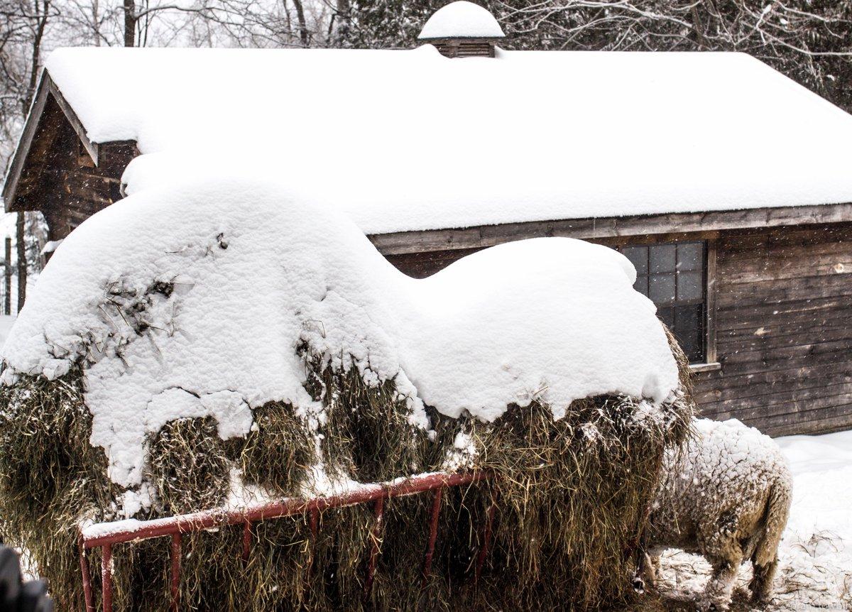 Bram Towbin's photo on #WinterStorm