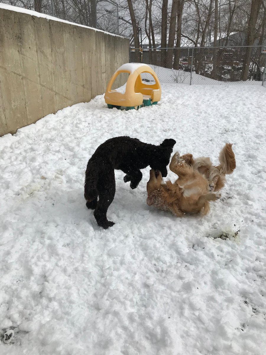 Emmet and Benji playing in the snow