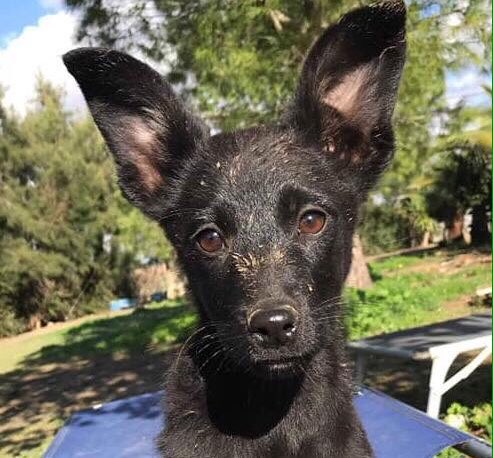 How could little Tuesday be an unwanted pup? A gorgeous little girl, she's listening out for anyone who might want to love &amp; adopt her forever in #UK #Germany #Holland  #AdoptDontShop #rescuedog #puppylove #cute<br>http://pic.twitter.com/I21ncotQfW