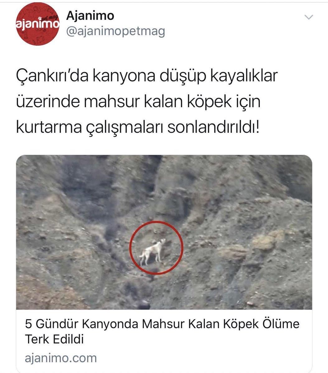 #kanyonköpekkurtarılsın! Çankırı Merkez'deki kanyonda, günlerdir aç-susuz, mahsur... Doğal afetlerde köpekleri kullanmayı biliyoruz; konu, köpeğe yardıma gelince ölüme mi terk edeceğiz? Lütfen köpeği kurtarın. @AFADBaskanlik @tcbestepe @RT_Erdogan @bekirpakdemirli