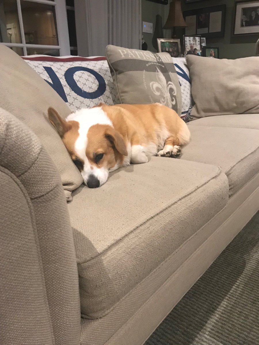 I'm waiting for a Corgi New Deal.  Although the deal I have now isn't bad.