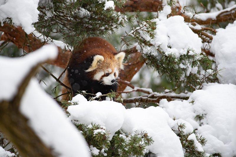 Woodland Park Zoo's photo on #SnowMageddon2019