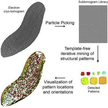 Our paper with Frank Alber's group about structural pattern mining of cellular electron cryotomograms is out now in @Structure_CP: https://t.co/EZrash6aFX