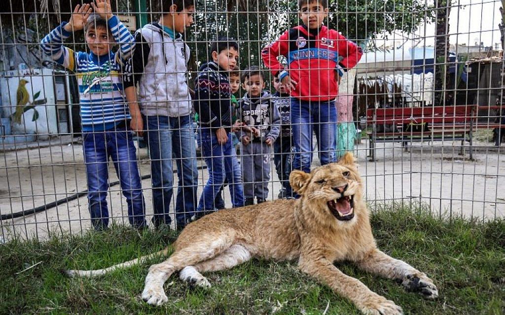 In the #Gaza Strip Pet a Lion, Declawed https://t.co/rCDzaqIYFM