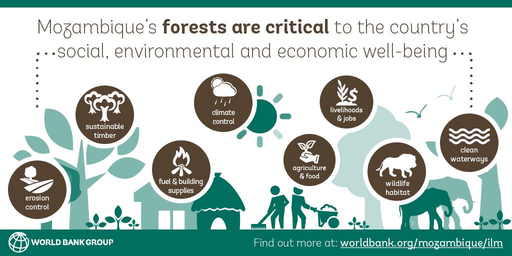 RT @WWFForestCarbon With natural forests covering 43% of Mozambique, forests are a source of employment, income, and livelihoods in rural areas. Find out how @WorldBank and partners are supporting the govt's ambitious plan to protect its forests. #FCPF #BetterWithForests https://t.co/Gi1krqb8se