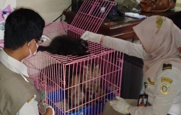 Pemeriksaan Burung Dan Kucing Tanpa Dokumen Karantina Balai Besar Karantina Pertanian Surabaya