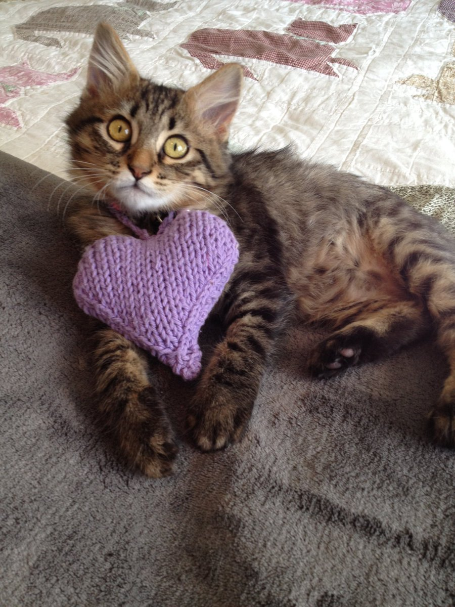#HappyValentinesDay #tbt #CatsOfTwitter @kat3796 @planetpakua  @TiffyLaw3 @BlaineRincon @Miss_1999 @RoodJood @Cecinatrix @SpiessensVicky @LilithTheCat999