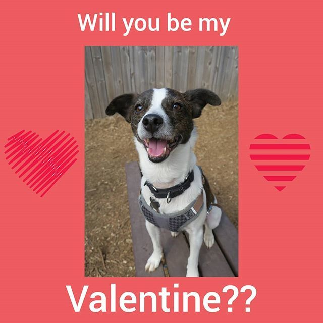 Happy Valentine&#39;s Day from Nitro! He&#39;s looking for a home.... can you help? #happyvalentinesday #adoptme #loveme #loveyou #love #bemine  #bemyvalentine #secretadmirer,  #sweetheart #thatslove #valentine #valentines #valentinesday2019 #whoneedsavalentine #willyoubemyvalentine<br>http://pic.twitter.com/yu2SXy7bXY