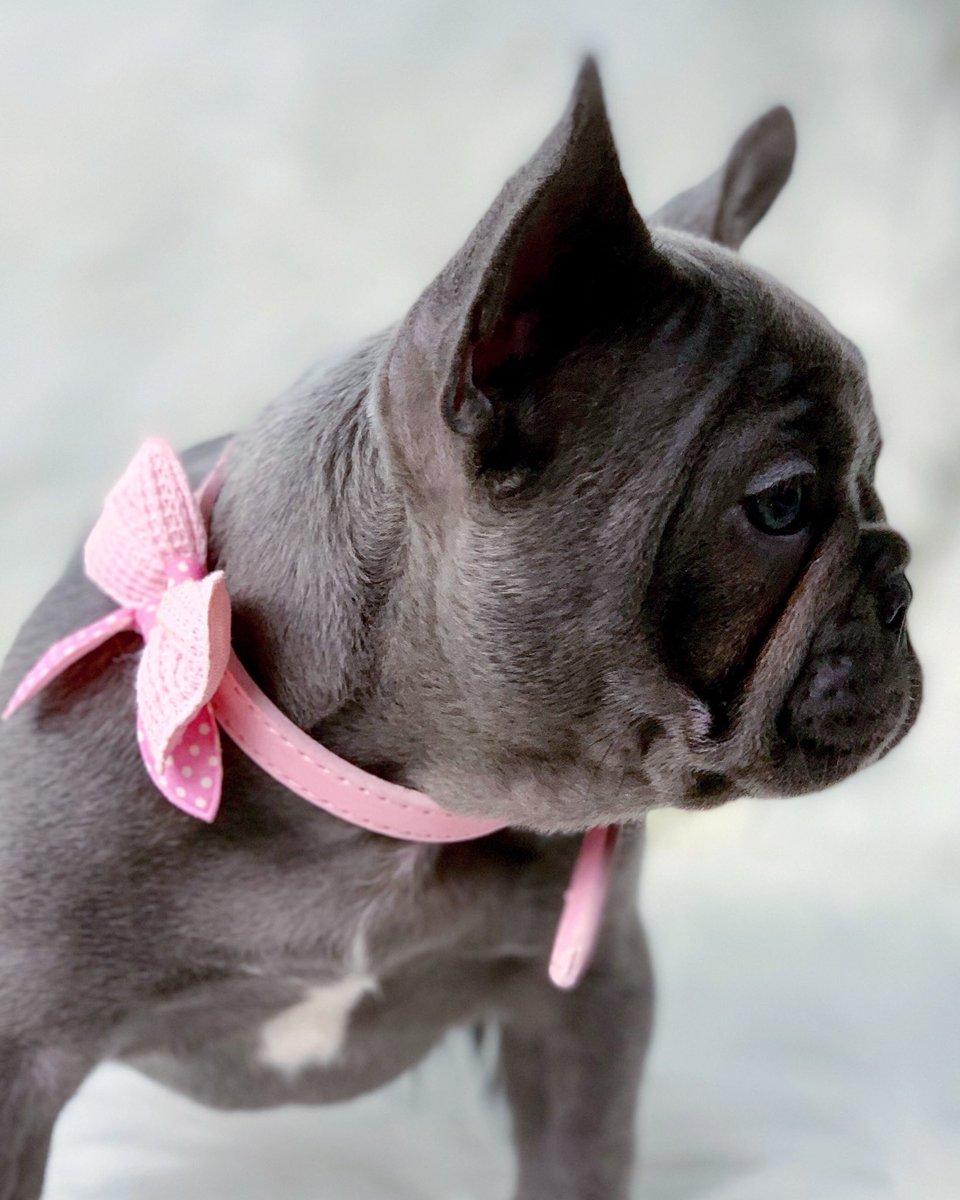 HAPPY VALENTINES DAY my FRIENDS  LOVE YOU  @oakleybfrenchie #bluebayoufrenchies #frenchie #frenchies #frenchiesofinstagram #cutepuppies #dogstagram #puppylove #frenchbulldog #frenchbulldogs #frenchbulldoglove #puppy #puppies #valentines #valentinesday #dog<br>http://pic.twitter.com/3gFYAJYBYP
